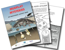 Mudflat Mysteries Educational Acitivity Book